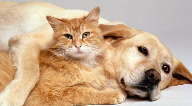 Cat and dog lying together waiting for their Christmas Gifts for Pets from Life's Abundance.